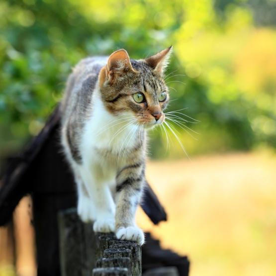 Faire bouger un chat ayant des problèmes d'arthrose