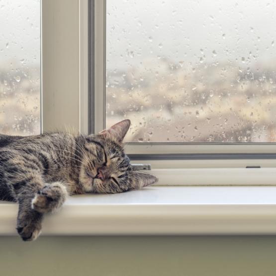 Binnenkort op reis? Zo bereid je je kat voor op je afwezigheid.