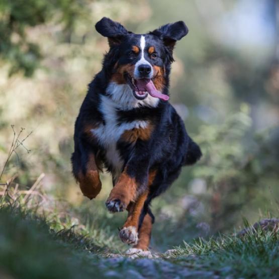 Leukste wandelroutes hond