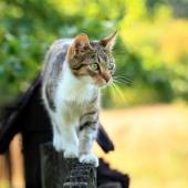 Waarom katten met artrose voldoende moeten bewegen