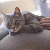Help, mijn kat heeft koude oren!