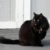 Je kat ademt te snel? Dit kan er aan de hand zijn