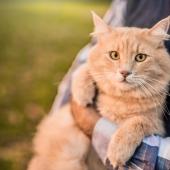 Jusqu'à quel âge peut vivre un chat ? Cela dépend surtout du maître