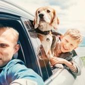 Je hond mee op vakantie? Tips voor een vlotte reis