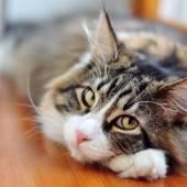 Wat is oormijt en hoe herken je het bij je kat?