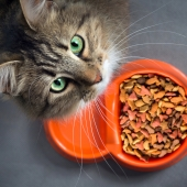 Help, mijn kat eet niet! Wat is de oorzaak?