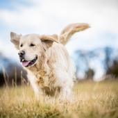 Waarom is het belangrijk dat je hond blijft bewegen?