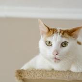 Plast je kat in huis? 5 tips om het op te lossen