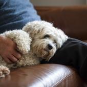hond wil niet geaaid worden
