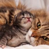 Je kat blaast naar je nieuwe kitten? Zo worden ze de beste maatjes!
