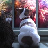 Voici revenu le temps des bonnes résolutions... Y compris pour votre animal de compagnie !