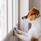 chien devra rester seul à la maison