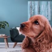 Votre chien et les feux d'artifice : 5 conseils pour le supporter sereinement