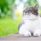 Kat gelukkig, blij, goed in zijn vel