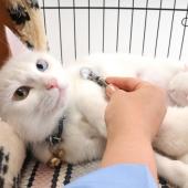 kat heeft warme oren chat a les oreilles chaudes