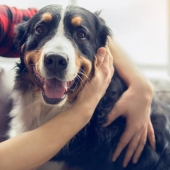 Ontworming honden