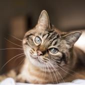 L'arthrose chez le chat : traitement et compléments