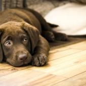 Wormen bij honden