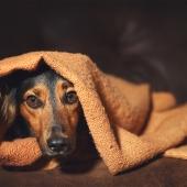 stress chien réduire apaiser conseils