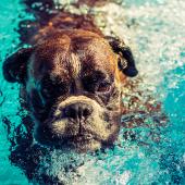 Spelen in een hondenzwembad? Dolle pret voor je viervoeter!