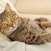 Is je kat lusteloos? Hou haar goed in de gaten!