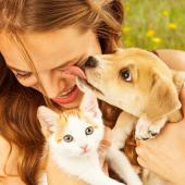 Kat en hond samen opvoeden? Het kan!