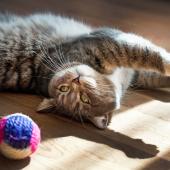 Comment faire bouger son chat d'intérieur?