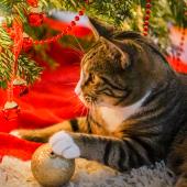 Help, mijn kat klimt in de kerstboom!