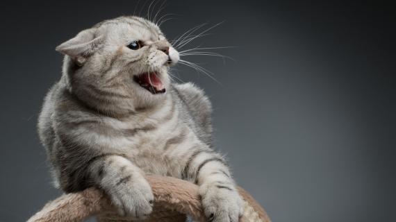 Help, onze kat blaast naar de baby!