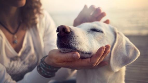 Hartfalen bij je hond: moet je jouw maatje laten inslapen?