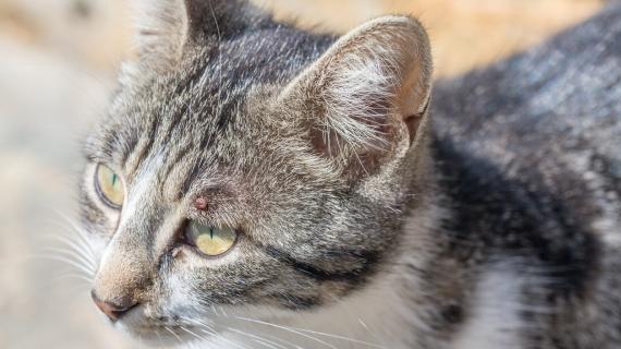 Je kat ontwormen: dit moet je zeker weten