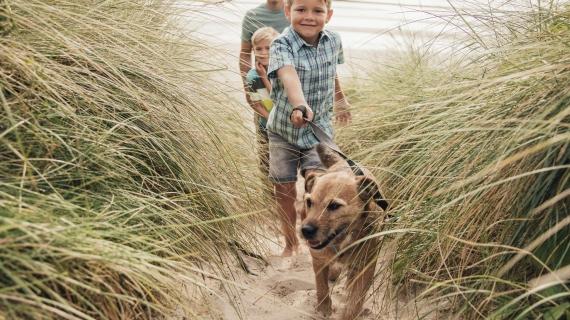 Peur que votre chien souffre d'arthrose ? Attention aux symptômes !