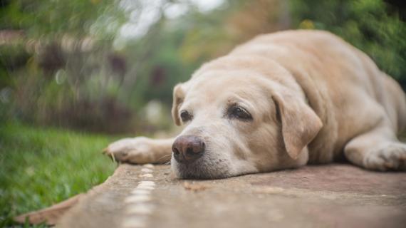 Heeft je hond artrose? Zo hou je de levenskwaliteit op peil!