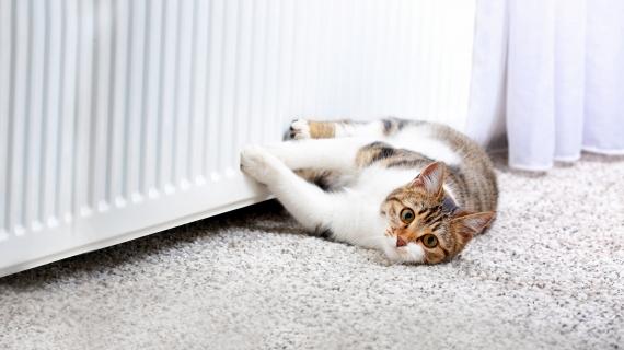 Wat is de normale lichaamstemperatuur van een kat?
