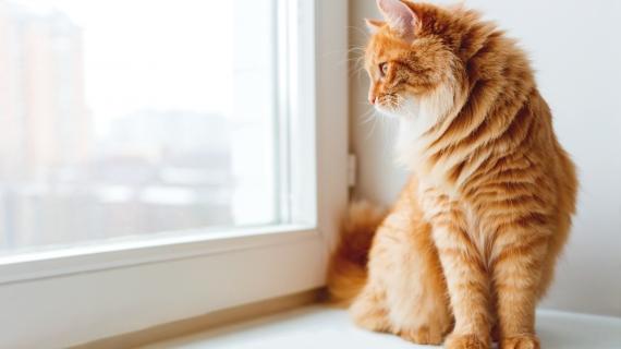 Een kat houden op je appartement? Dat kan!