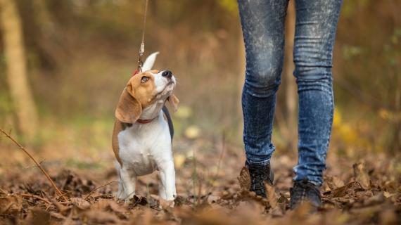 Je hond uitlaten: hoe vaak is gezond?