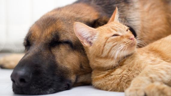 Hoe je hond of kat ontwormen? 3 handige tips