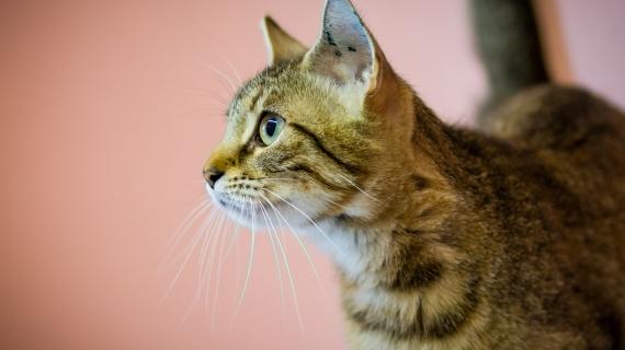 Kattentaal: dit vertelt de lichaamstaal van je kat