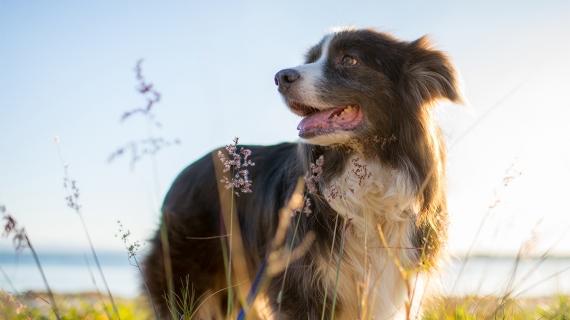 hond gelukkig blij tegen stress
