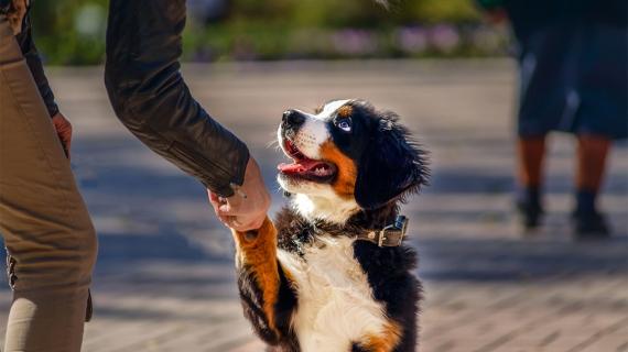 Éduquer chien comportement du chien