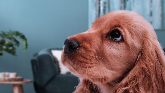 Je hond en vuurwerk: 5 tips voor tijdens het vuurwerk