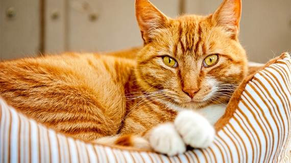 ténia vers chats ver types chat