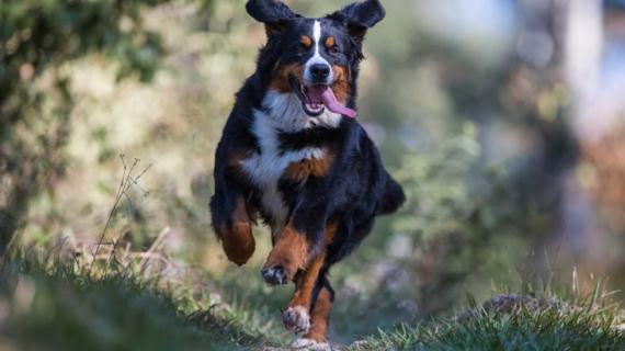 les meilleures promenades pour chiens