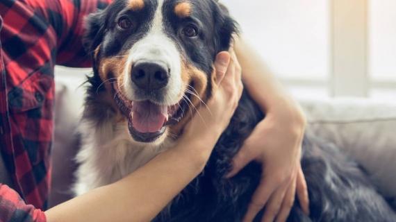 La vermifugation du chien