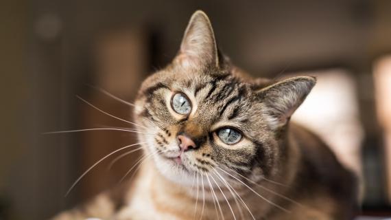 Artrose bij katten