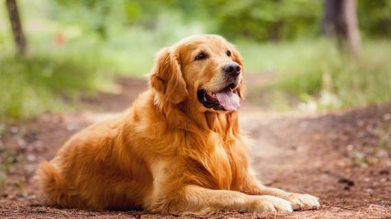 Dikke hond afvallen