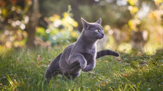 beweging kat