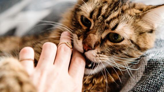 """""""Foei, foei, foei!"""" Heeft jouw kat gedragsproblemen?"""