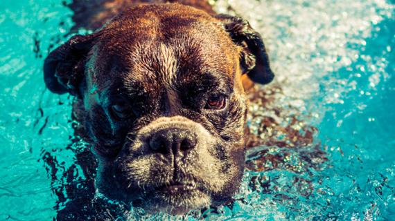 Jouer dans une piscine pour chiens, un vrai plaisir !