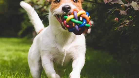 Je puppy goed opvoeden: zo leer je hem het bijten af